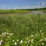 North Texas Giving Day Booster: The Nature Conservancy