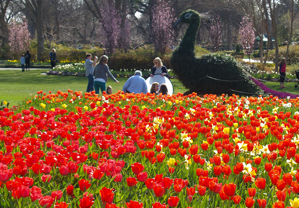 JUST IN: Dallas Blooms Is Extended To Easter Sunday Thanks To Bank Of America