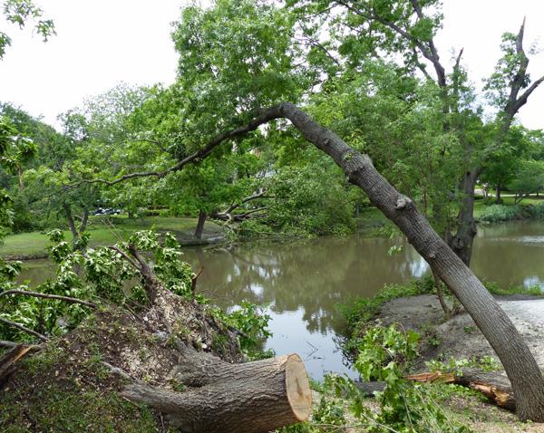 Lakeside area around Turtle Creek
