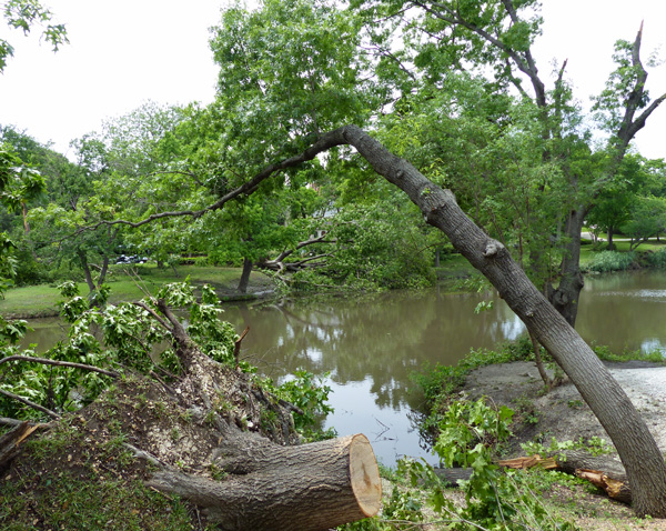 Downed trees along Turtle Creek