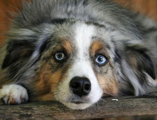 Concerned canine