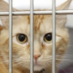 Animal Shelters And Rescue Groups Are Being Stretched Beyond Limits And Need Help
