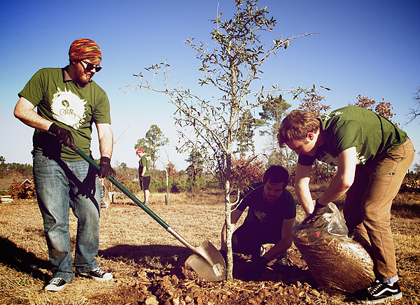 Planting an oak in the wake of a wildfire*