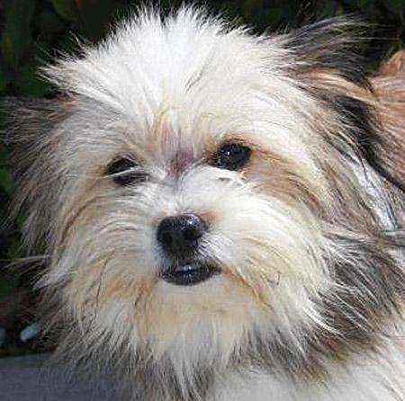 Shelter dog before adopton