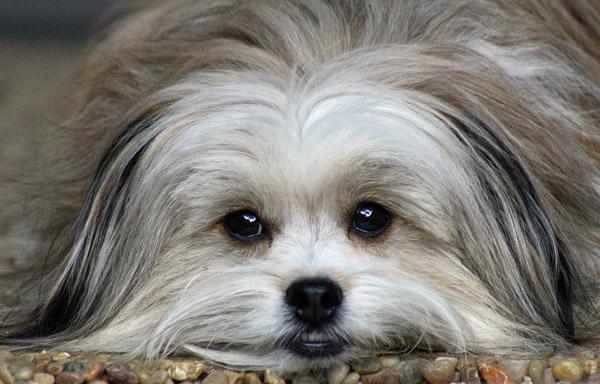 Shelter dog after adoption