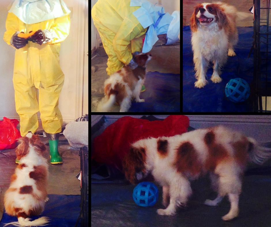 Bentley in quarantine*