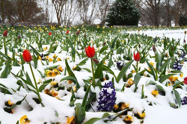 Flowers in the snow*