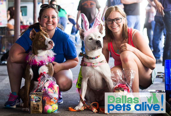 North Texas Giving Day Booster: Dallas Pets Alive