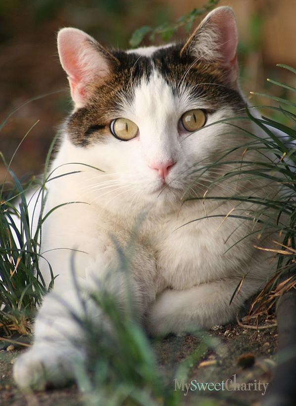 Former shelter feline