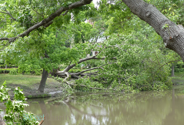 May 8 storm damage (File photo)