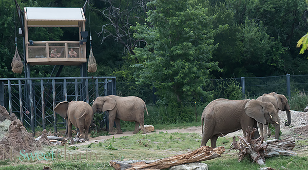 """The Party Animals Overcame Traffic Woes For Zoo To Do's 25th Anniversary """"Silver Safari""""  Kick-Off Party"""