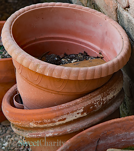 Abandoned flower pots