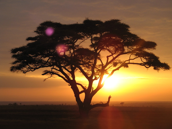 Wild Wonders And Fine Wines In Africa**