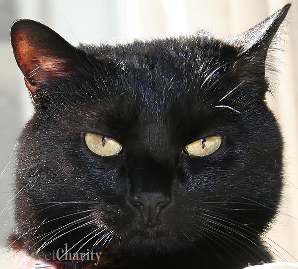 Black cat (File photo)