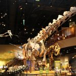 JUST IN: Dr. Linda Abraham-Silver Named New Chief Executive Officer For Perot Museum