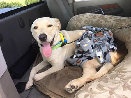 JUST IN: Accident Victim Daisy Mae Was Just Found In A Ravine With A Broken Femur And Rescued By Mutts And Mayhem