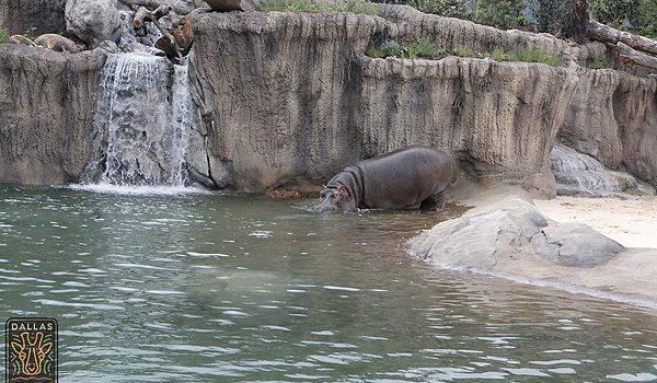 MySweetCharity Summer Pitch: Dallas Zoo