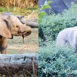 MySweetCharity Photo Gallery: 2017 Zoo To Do