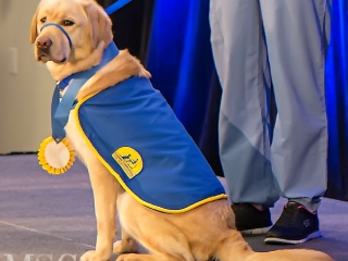 IMG_8007 Matriculating puppy