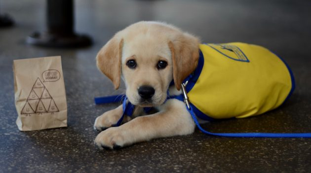 Take A Bite Of Chipotle For Canine Companions For Independence On May 16